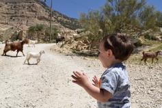Watching Goats