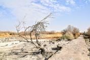 Azraq Wetland Reserve