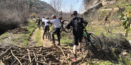 Crossing Wood piles