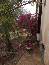 Plants, House, Water harvesting