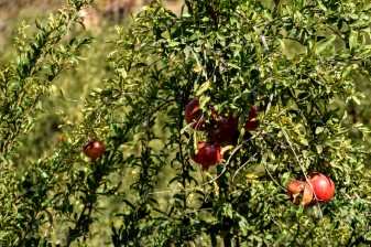 Pomegranate Valley