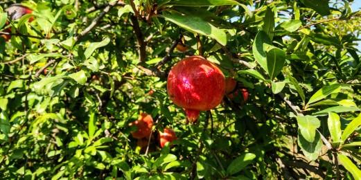 Pomegranate Valley